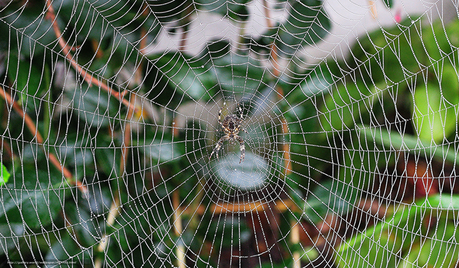 Download wallpaper spider,  web,  Macro free desktop wallpaper in the resolution 2048x1195 — picture №657762