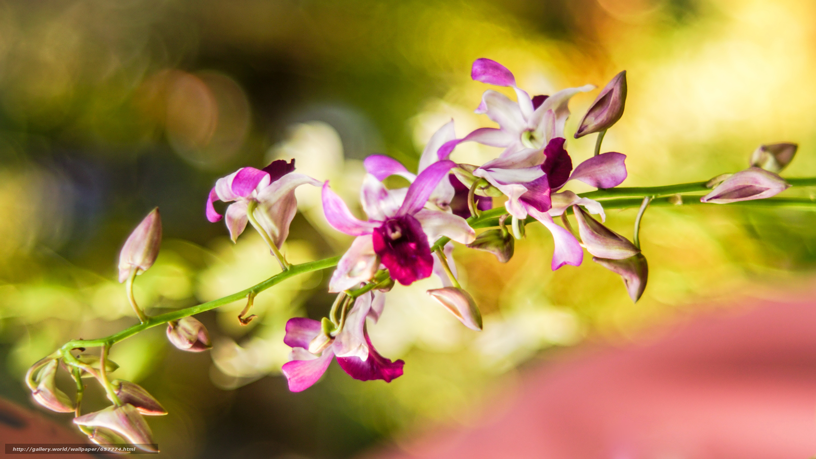 Download wallpaper Flowers,  flower,  ORCHIDS,  Macro free desktop wallpaper in the resolution 6000x3376 — picture №657774