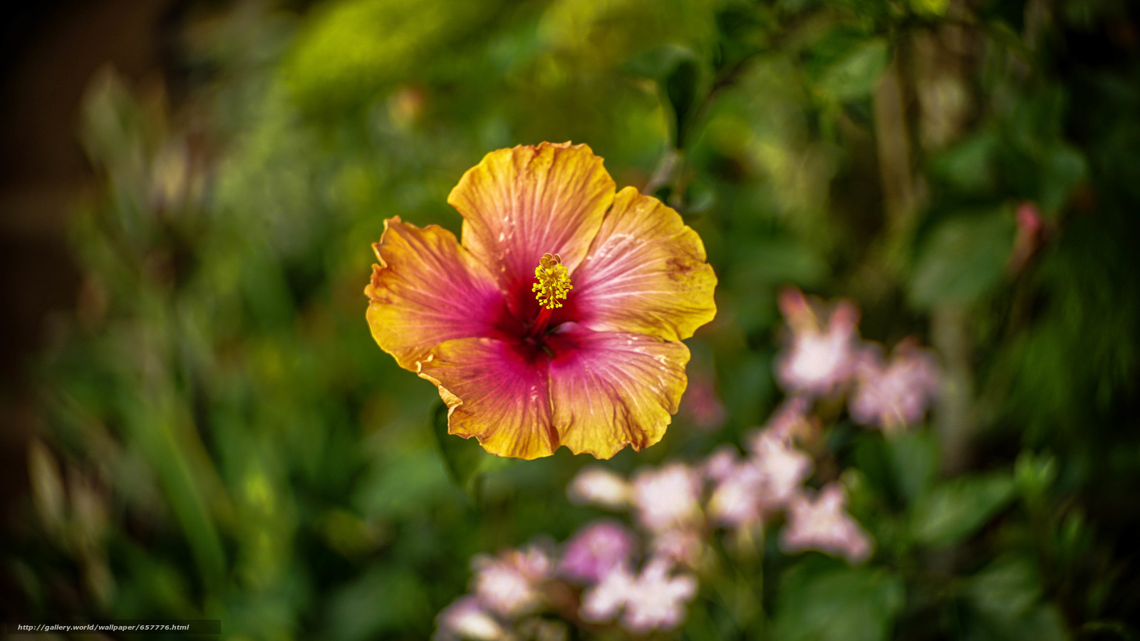 Tlcharger Fond d'ecran Fleurs,  fleur,  exotique,  Macro Fonds d'ecran gratuits pour votre rsolution du bureau 6000x3376 — image №657776