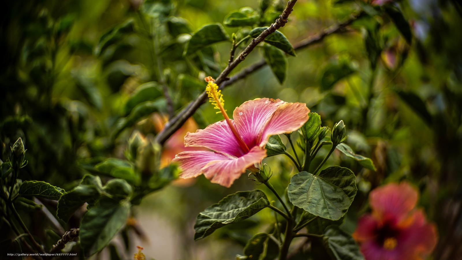 scaricare gli sfondi Fiori,  fiore,  esotico,  Macro Sfondi gratis per la risoluzione del desktop 6000x3376 — immagine №657777