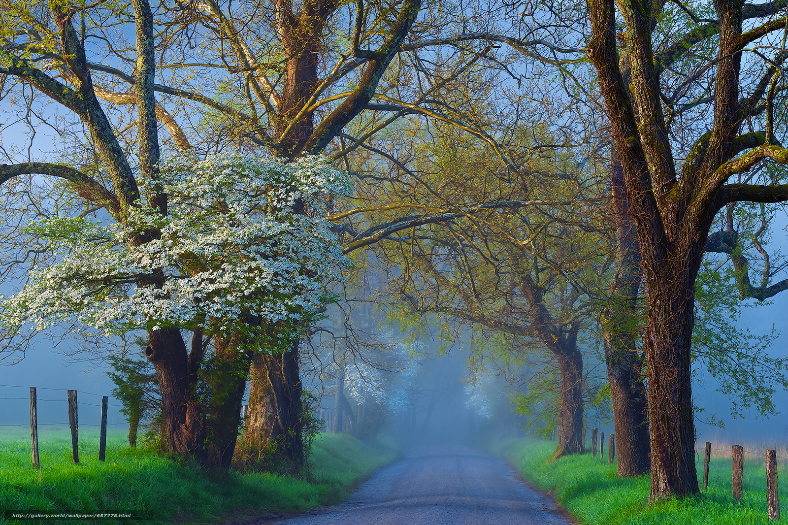 Download wallpaper road,  field,  trees,  fog free desktop wallpaper in the resolution 2048x1365 — picture №657778
