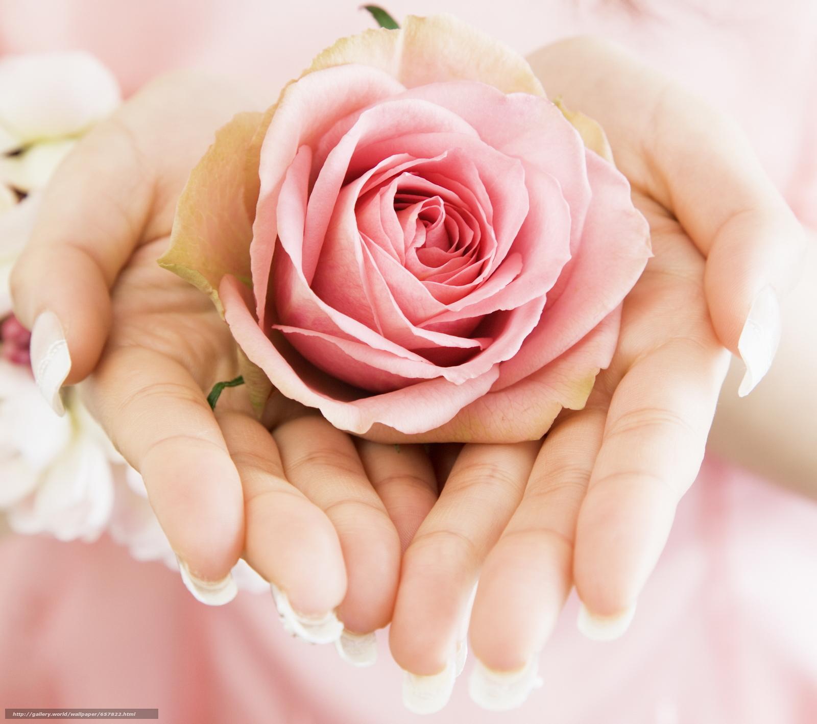 Скачать обои цветы,  цветок,  роза,  розы бесплатно для рабочего стола в разрешении 2094x1856 — картинка №657822