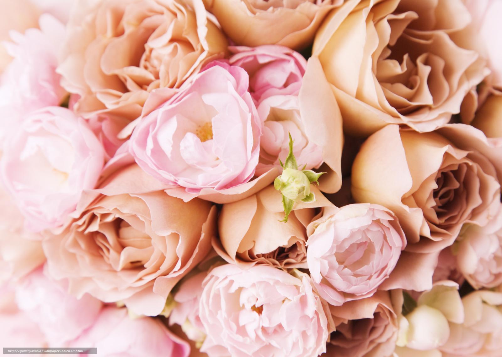 scaricare gli sfondi Fiori,  fiore,  rosa,  Roses Sfondi gratis per la risoluzione del desktop 2950x2094 — immagine №657828