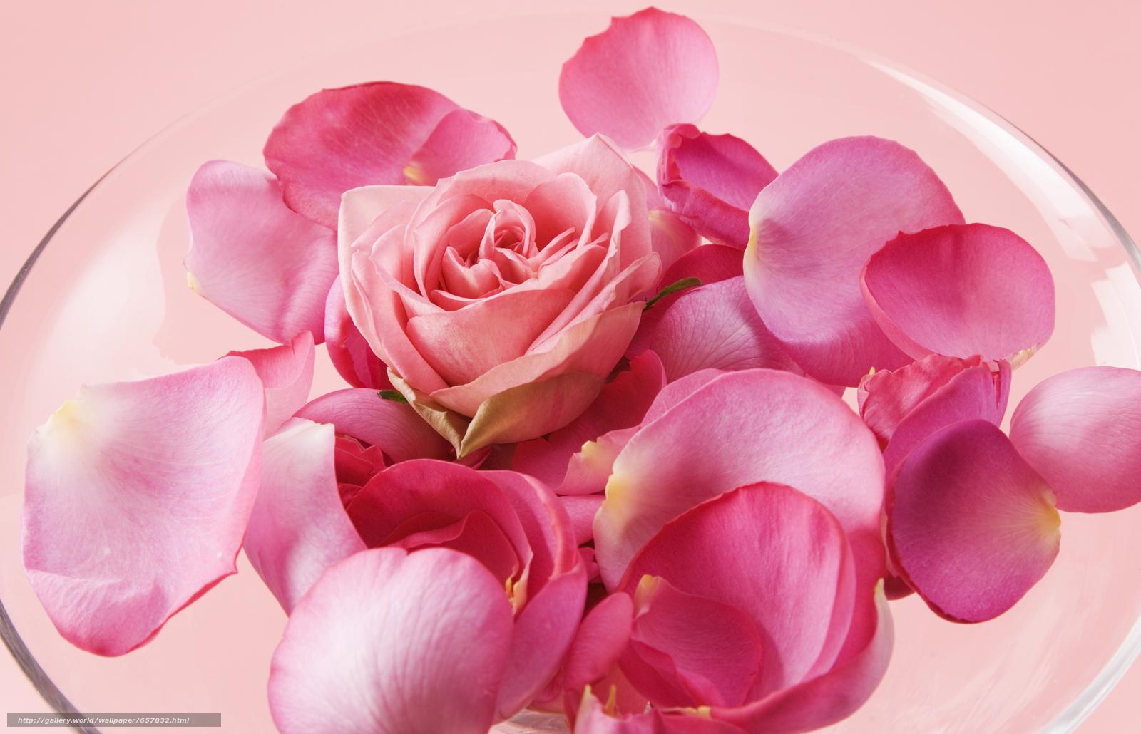 Скачать обои цветы,  цветок,  роза,  розы бесплатно для рабочего стола в разрешении 2950x1899 — картинка №657832