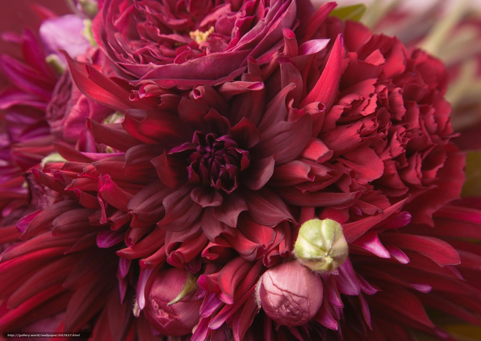 Скачать обои цветы,  цветок,  букет,  композиция бесплатно для рабочего стола в разрешении 2950x2094 — картинка №657837