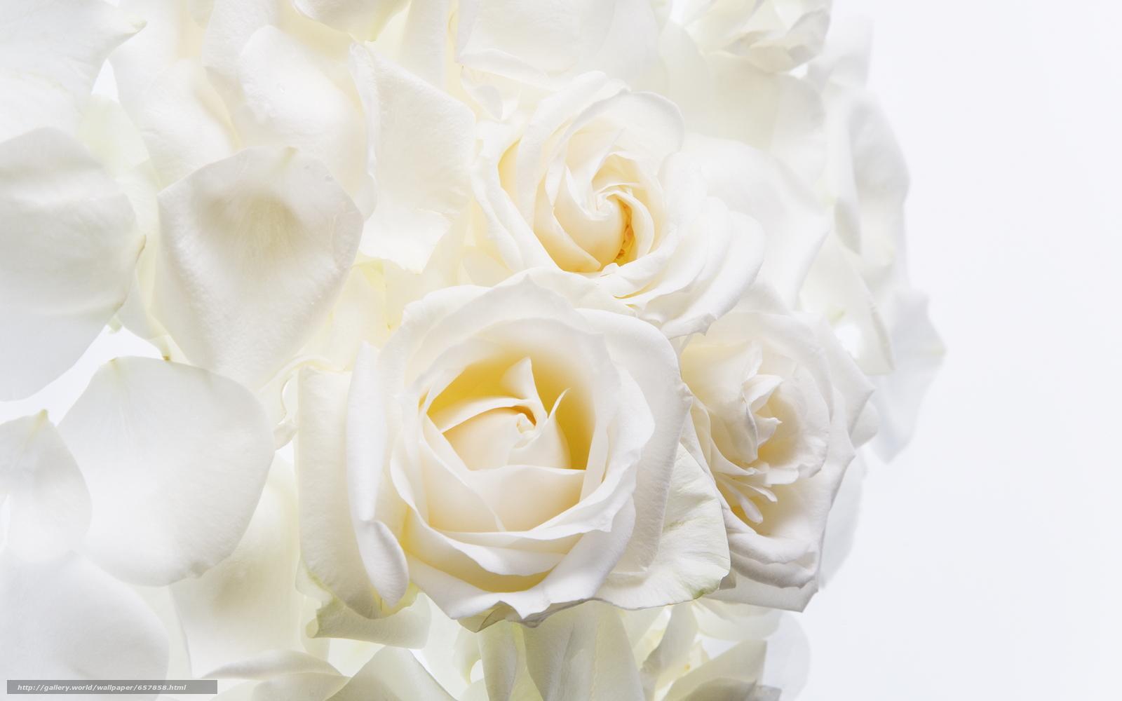 Скачать обои цветы,  цветок,  роза,  розы бесплатно для рабочего стола в разрешении 2950x1843 — картинка №657858
