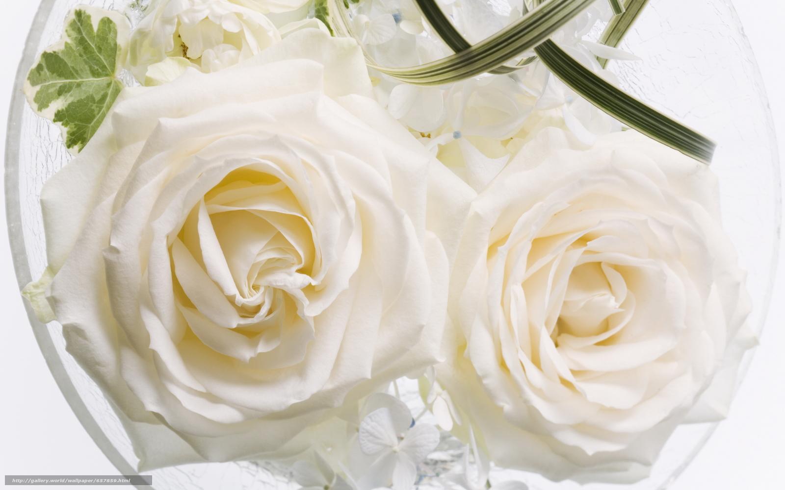 壁紙をダウンロード フラワーズ,  花,  ローズ,  バラ デスクトップの解像度のための無料壁紙 2950x1843 — 絵 №657859