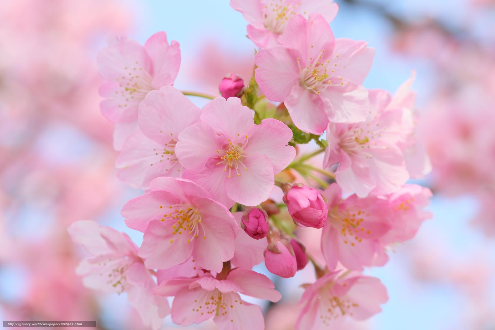 scaricare gli sfondi Fiori,  fioritura,  COLORE,  FILIALE Sfondi gratis per la risoluzione del desktop 5760x3840 — immagine №657869
