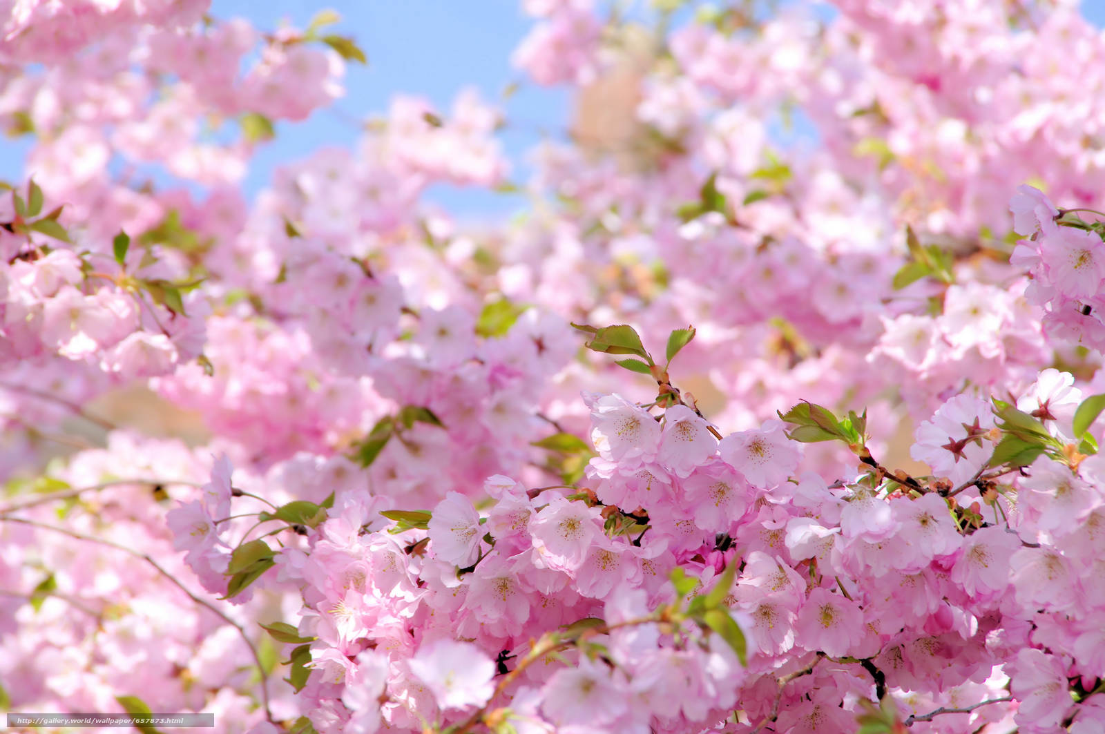 Download wallpaper Flowers,  flowering,  COLOR,  BRANCH free desktop wallpaper in the resolution 9344x6208 — picture №657873