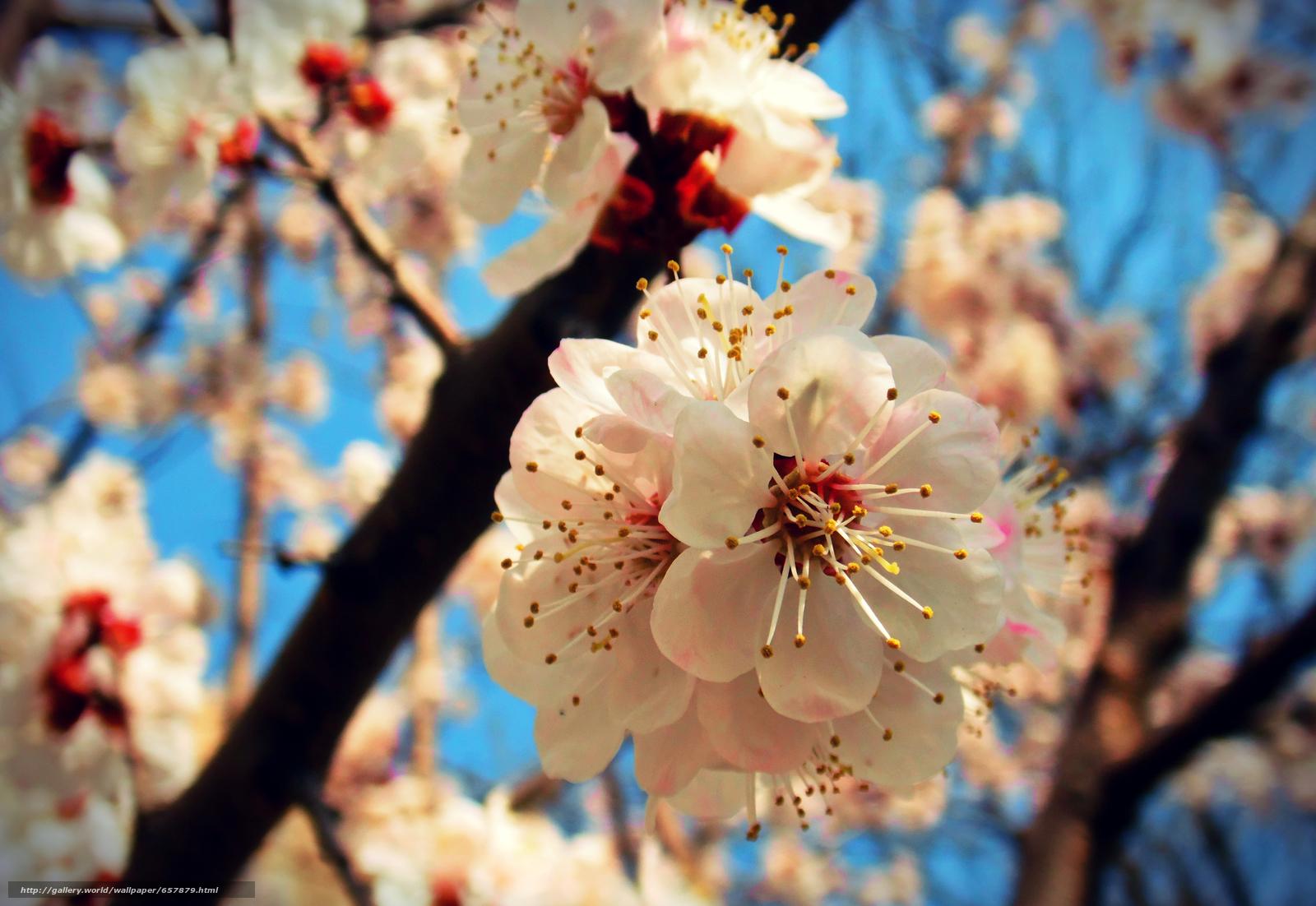scaricare gli sfondi Fiori,  fioritura,  COLORE,  FILIALE Sfondi gratis per la risoluzione del desktop 4000x2756 — immagine №657879
