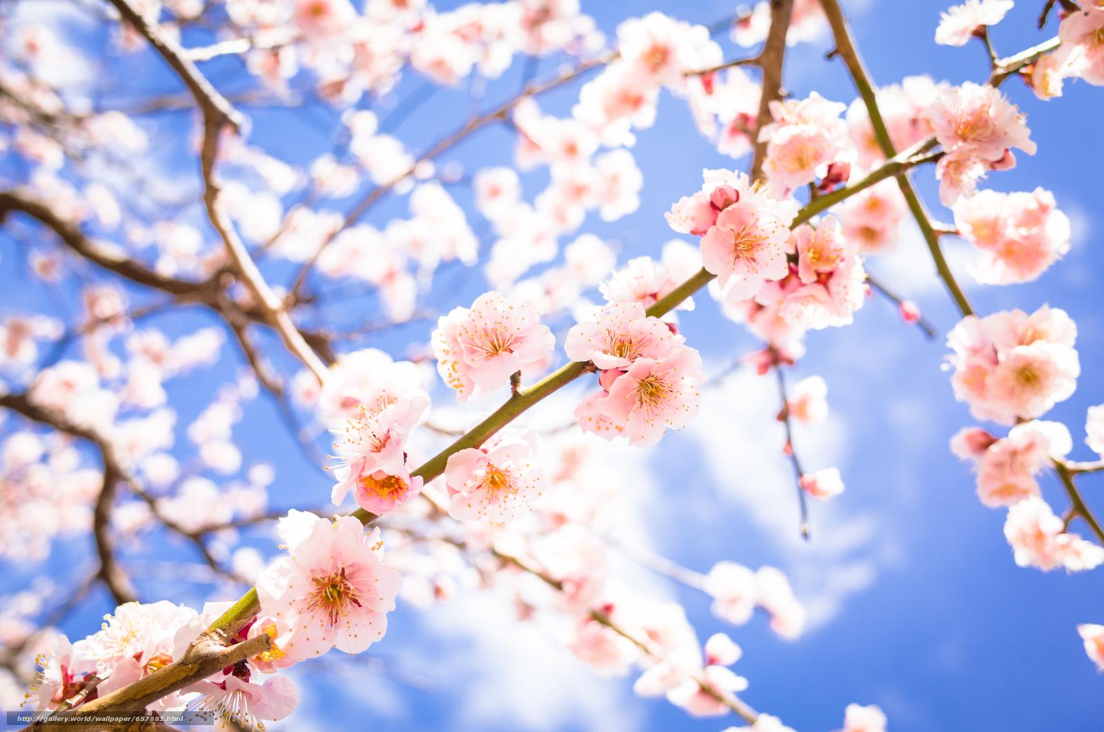 Скачать обои цветы,  цветение,  цвет,  ветки бесплатно для рабочего стола в разрешении 4928x3264 — картинка №657881
