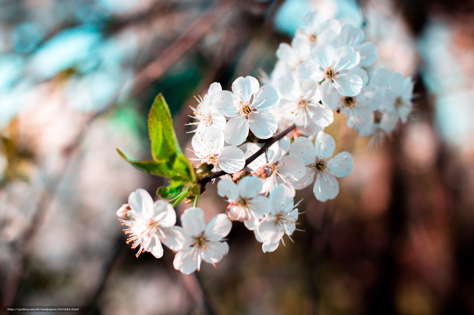 scaricare gli sfondi Fiori,  fioritura,  COLORE,  FILIALE Sfondi gratis per la risoluzione del desktop 4917x3265 — immagine №657883