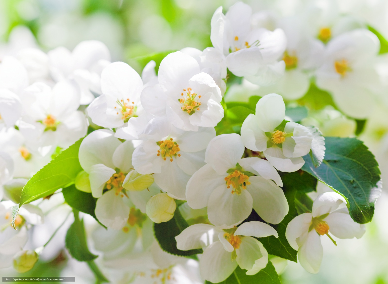scaricare gli sfondi Fiori,  fioritura,  COLORE,  FILIALE Sfondi gratis per la risoluzione del desktop 7464x5456 — immagine №657884