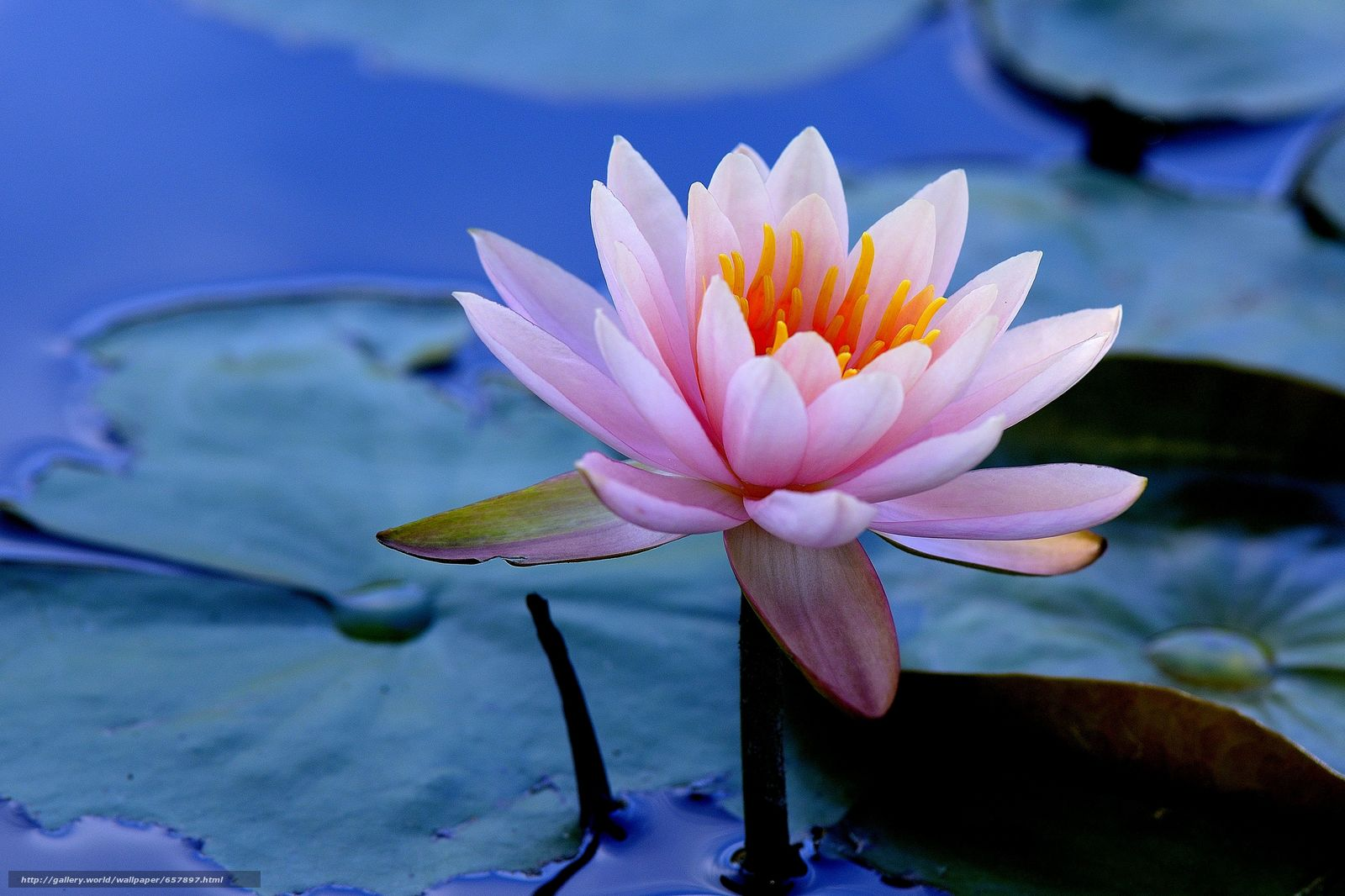 Download wallpaper water lily,  Water Lilies,  Flowers,  flora free desktop wallpaper in the resolution 4354x2902 — picture №657897