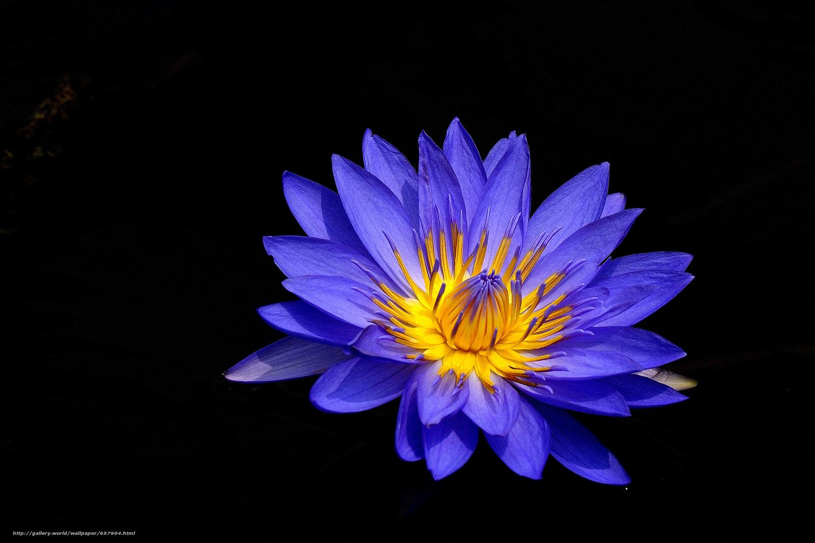 Скачать обои водяная лилия,  водяные лилии,  цветы,  флора бесплатно для рабочего стола в разрешении 3882x2588 — картинка №657904