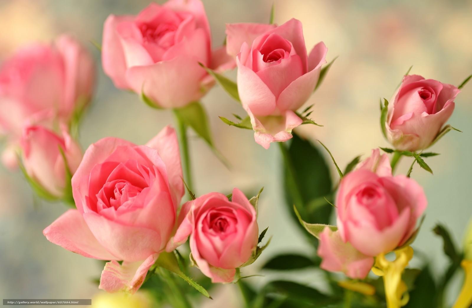 Скачать обои цветы,  роза,  розы,  композиция бесплатно для рабочего стола в разрешении 2900x1890 — картинка №657994