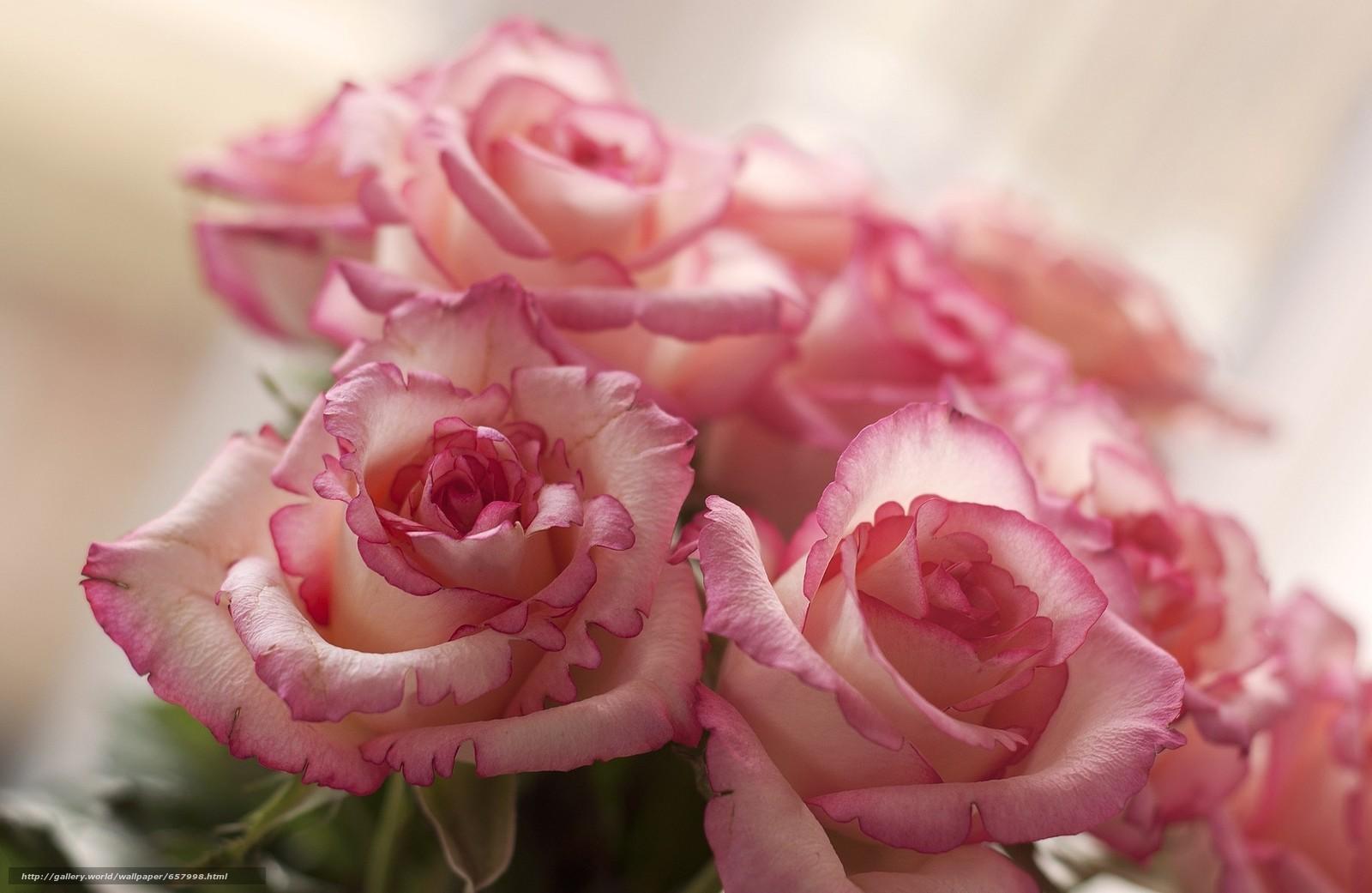 Скачать обои цветы,  роза,  розы,  композиция бесплатно для рабочего стола в разрешении 2048x1332 — картинка №657998
