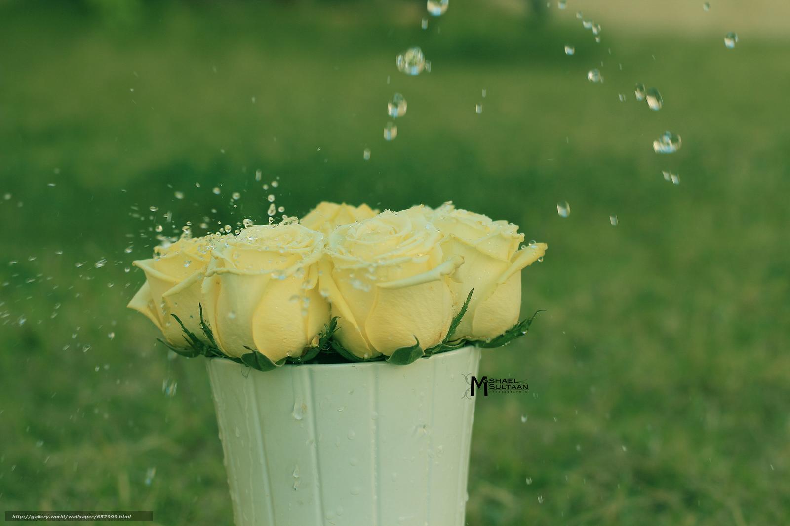 scaricare gli sfondi Fiori,  rosa,  Roses,  COMPOSIZIONE Sfondi gratis per la risoluzione del desktop 2048x1365 — immagine №657999