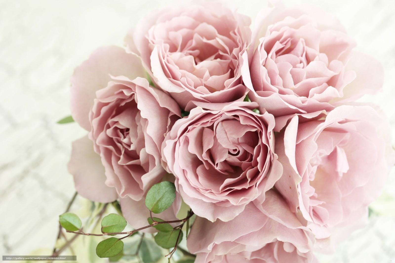 scaricare gli sfondi Fiori,  rosa,  Roses,  COMPOSIZIONE Sfondi gratis per la risoluzione del desktop 2400x1600 — immagine №658004