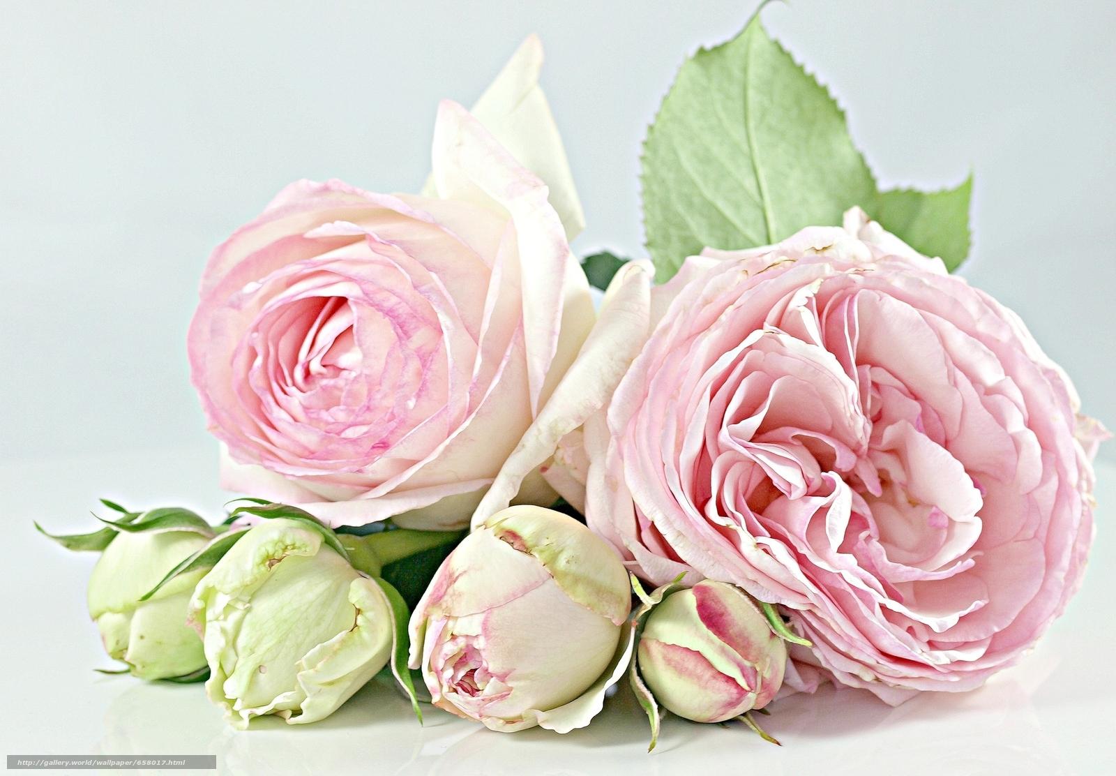 scaricare gli sfondi Fiori,  fiore,  rosa,  Roses Sfondi gratis per la risoluzione del desktop 2048x1423 — immagine №658017