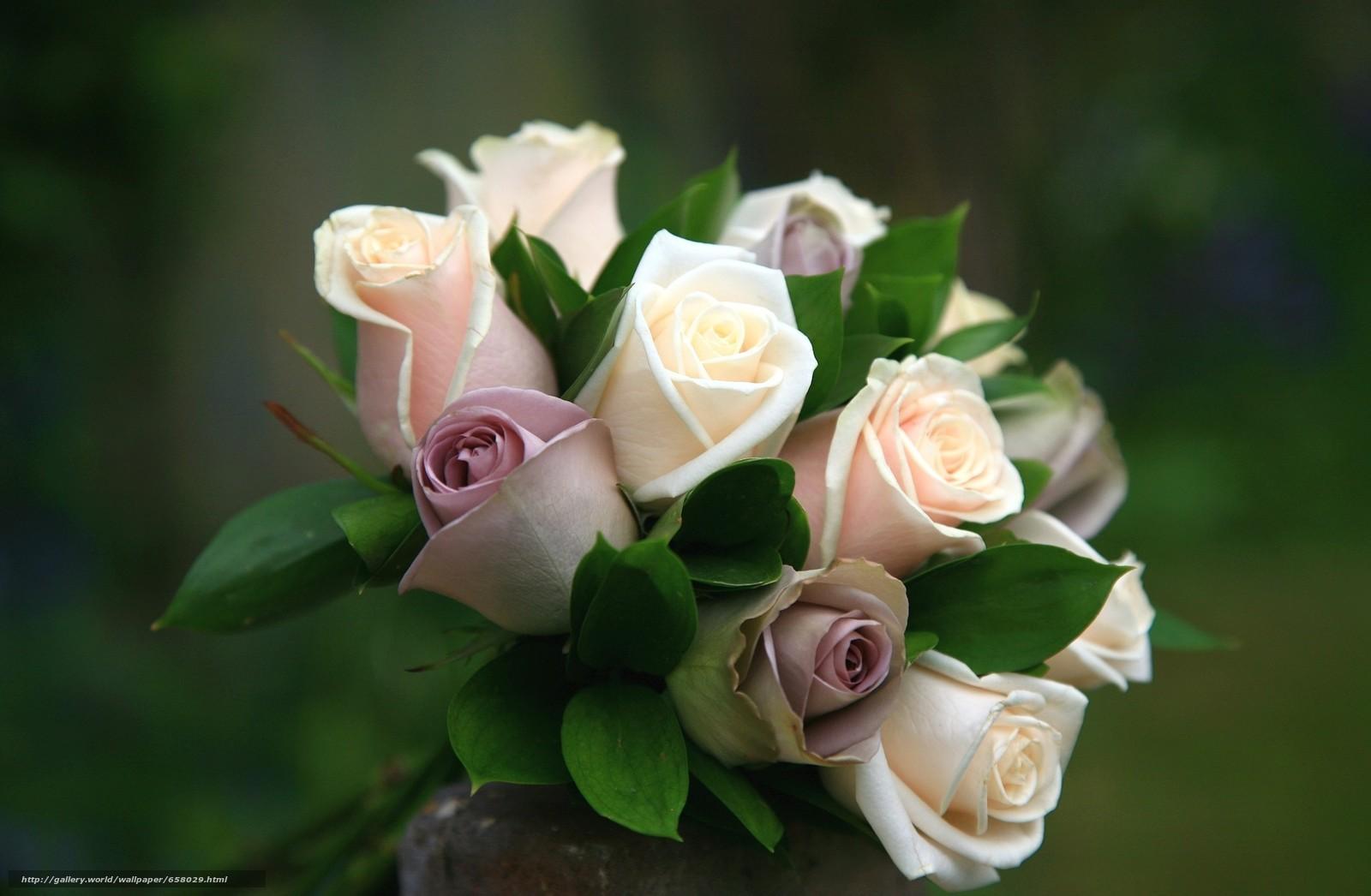 scaricare gli sfondi Fiori,  fiore,  rosa,  Roses Sfondi gratis per la risoluzione del desktop 2048x1339 — immagine №658029