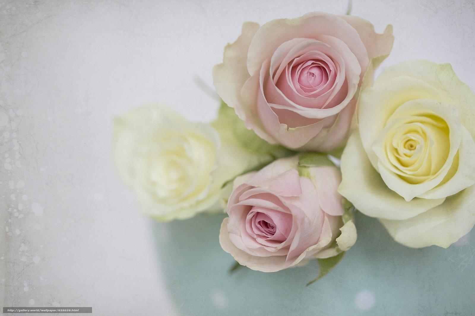 scaricare gli sfondi Fiori,  fiore,  rosa,  Roses Sfondi gratis per la risoluzione del desktop 2048x1365 — immagine №658039