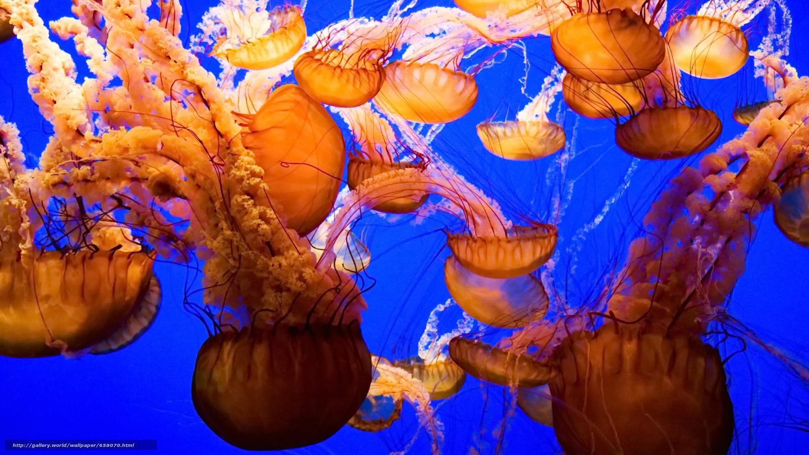 Скачать обои медуза,  медузы,  подводный мир,  вода бесплатно для рабочего стола в разрешении 1920x1080 — картинка №658070