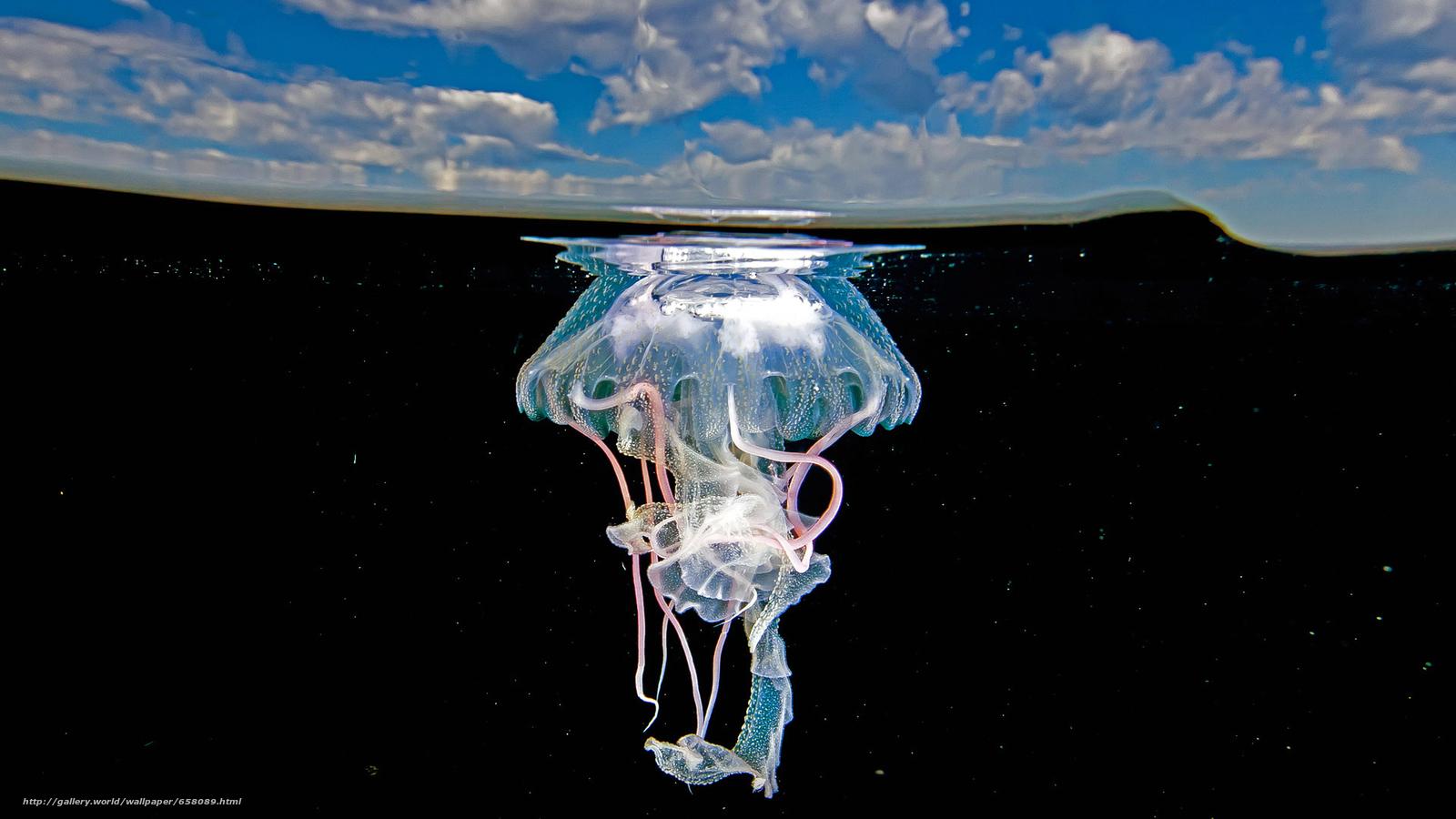 scaricare gli sfondi meduse,  Medusa,  Mondo subacqueo,  acqua Sfondi gratis per la risoluzione del desktop 1920x1080 — immagine №658089