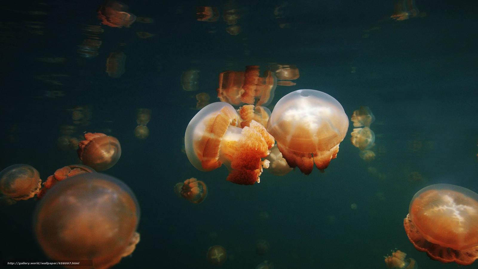 下载壁纸 海蜇,  海蜇,  海底世界,  水 免费为您的桌面分辨率的壁纸 1920x1080 — 图片 №658097