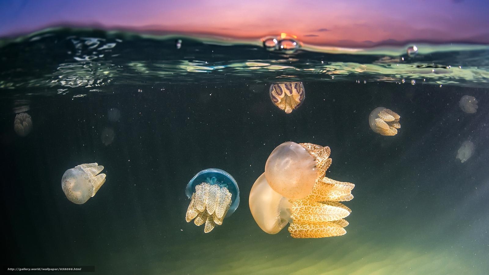 下载壁纸 海蜇,  海蜇,  海底世界,  水 免费为您的桌面分辨率的壁纸 1920x1080 — 图片 №658099