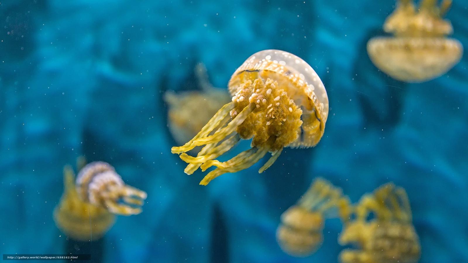 Скачать обои медуза,  медузы,  подводный мир,  вода бесплатно для рабочего стола в разрешении 2048x1152 — картинка №658162