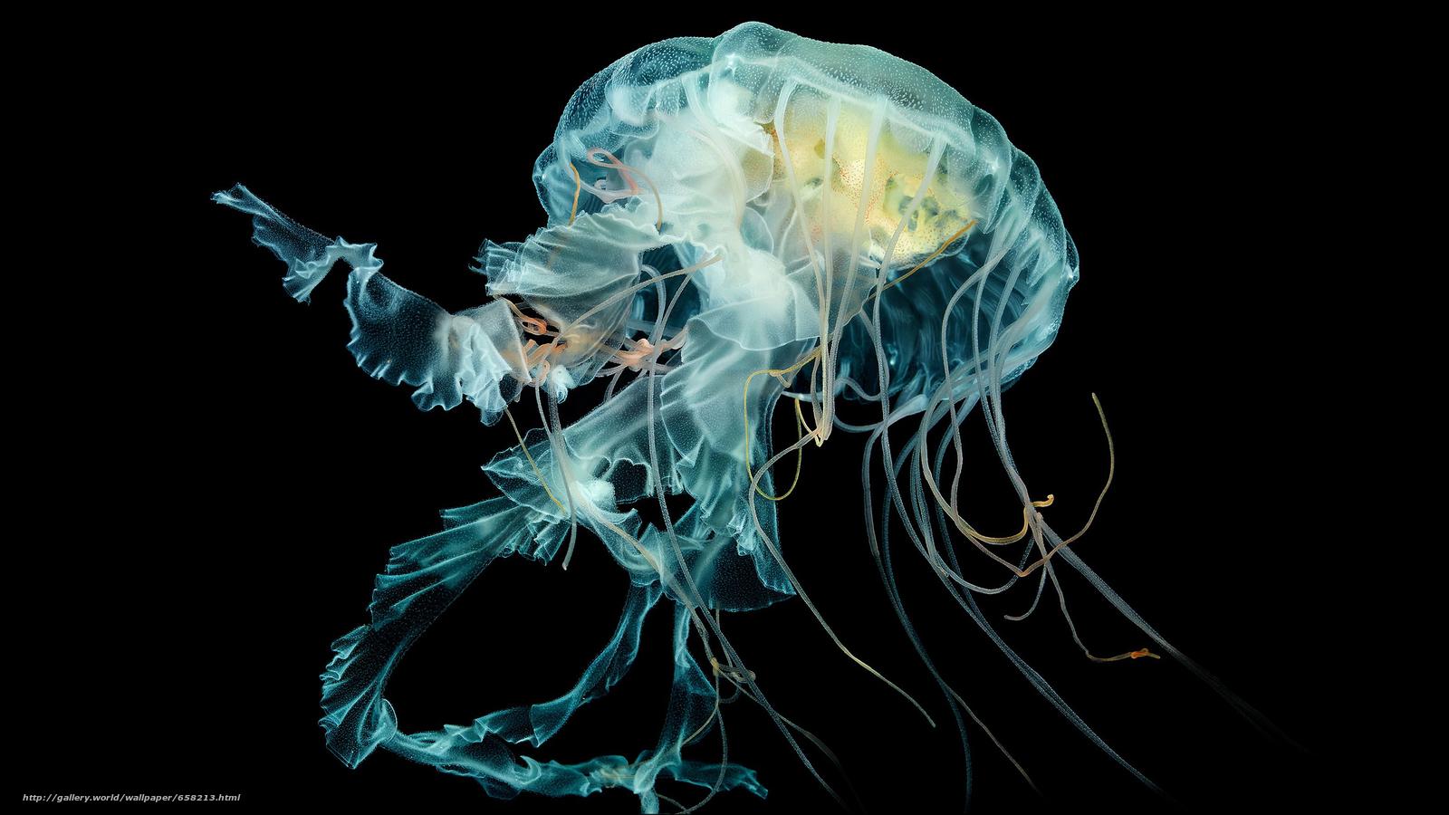 scaricare gli sfondi meduse,  Medusa,  Mondo subacqueo,  acqua Sfondi gratis per la risoluzione del desktop 2560x1440 — immagine №658213