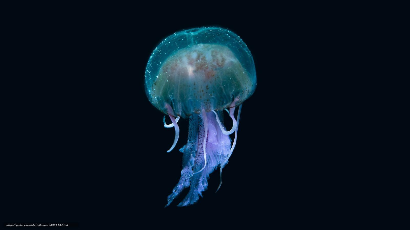 pobra tapety meduza,  Meduza,  Podwodny świat,  woda Darmowe tapety na pulpit rozdzielczoci 2560x1440 — zdjcie №658215