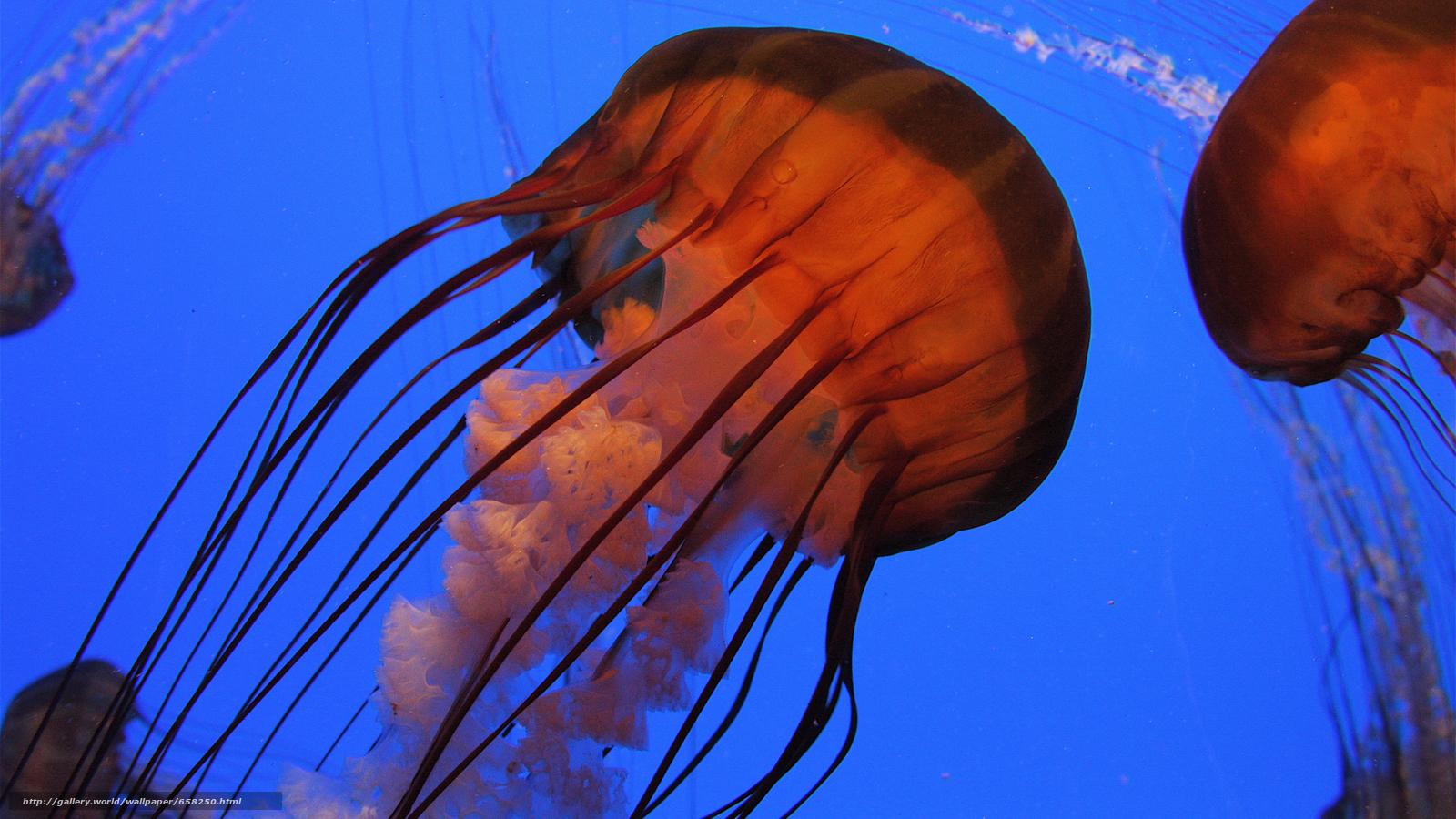 Скачать обои медуза,  медузы,  подводный мир,  вода бесплатно для рабочего стола в разрешении 3840x2160 — картинка №658250