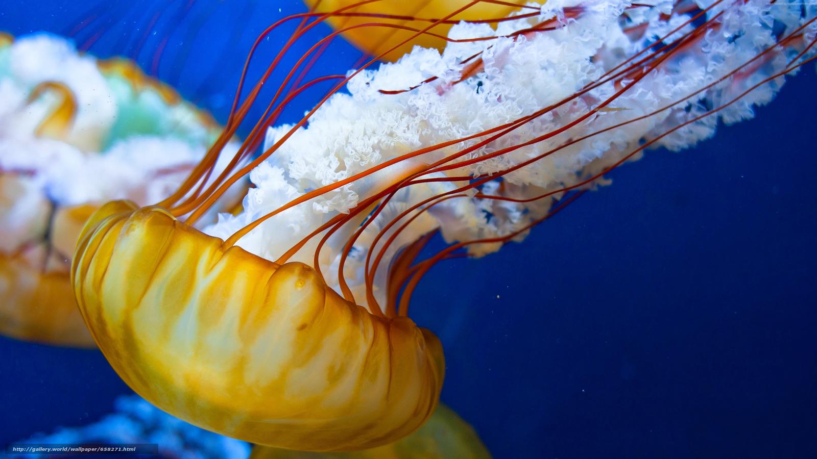 Tlcharger Fond d'ecran méduses,  Jellyfish,  Monde sous-marin,  eau Fonds d'ecran gratuits pour votre rsolution du bureau 3840x2160 — image №658271