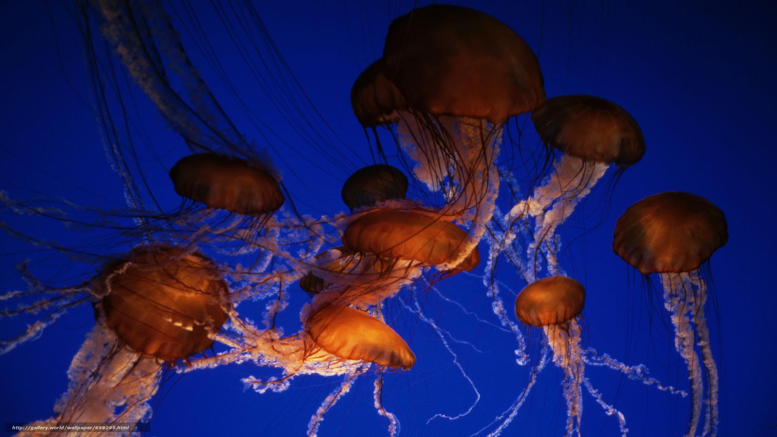Descargar gratis medusa,  Medusa,  Mundial de Actividades Subacuáticas,  agua Fondos de escritorio en la resolucin 3840x2160 — imagen №658295