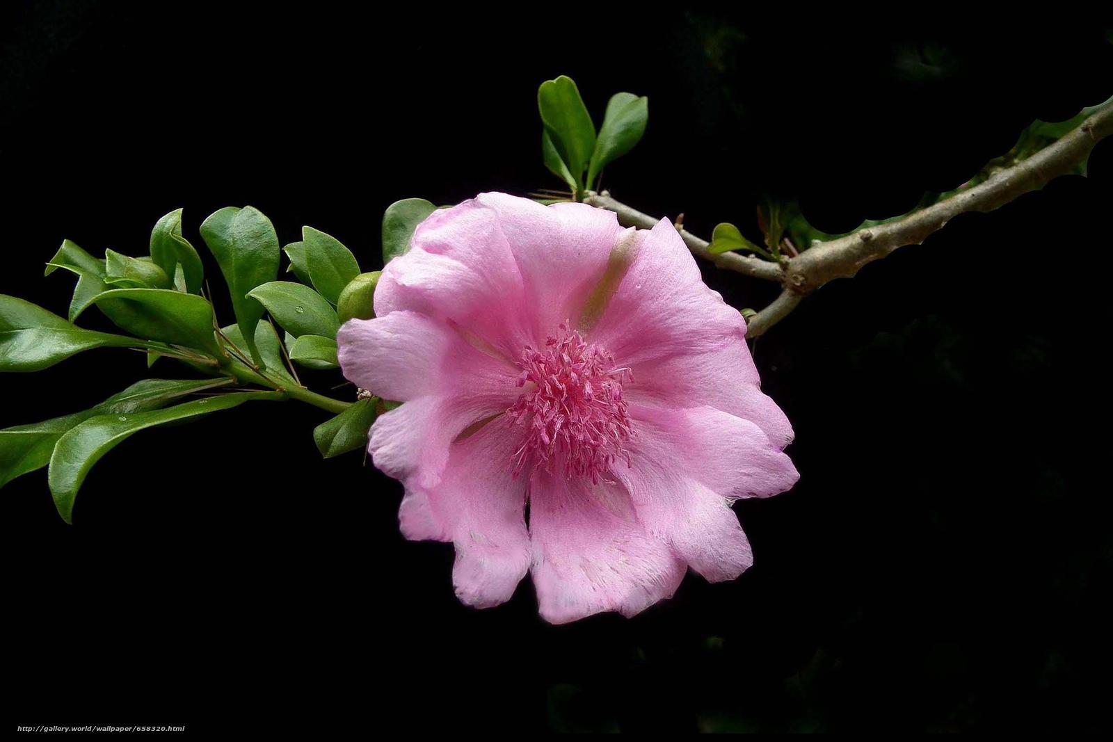 Скачать обои цветок,  цветы,  флора бесплатно для рабочего стола в разрешении 2550x1700 — картинка №658320