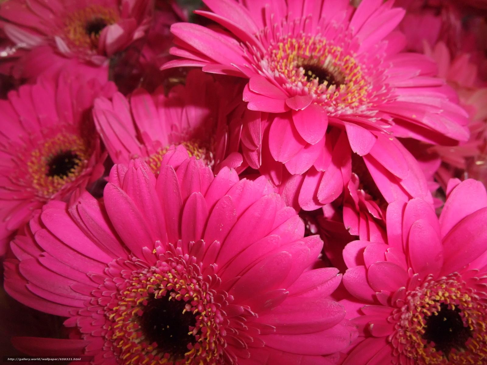 Descargar gratis flor,  Flores,  flora,  gerbera Fondos de escritorio en la resolucin 4000x3000 — imagen №658321