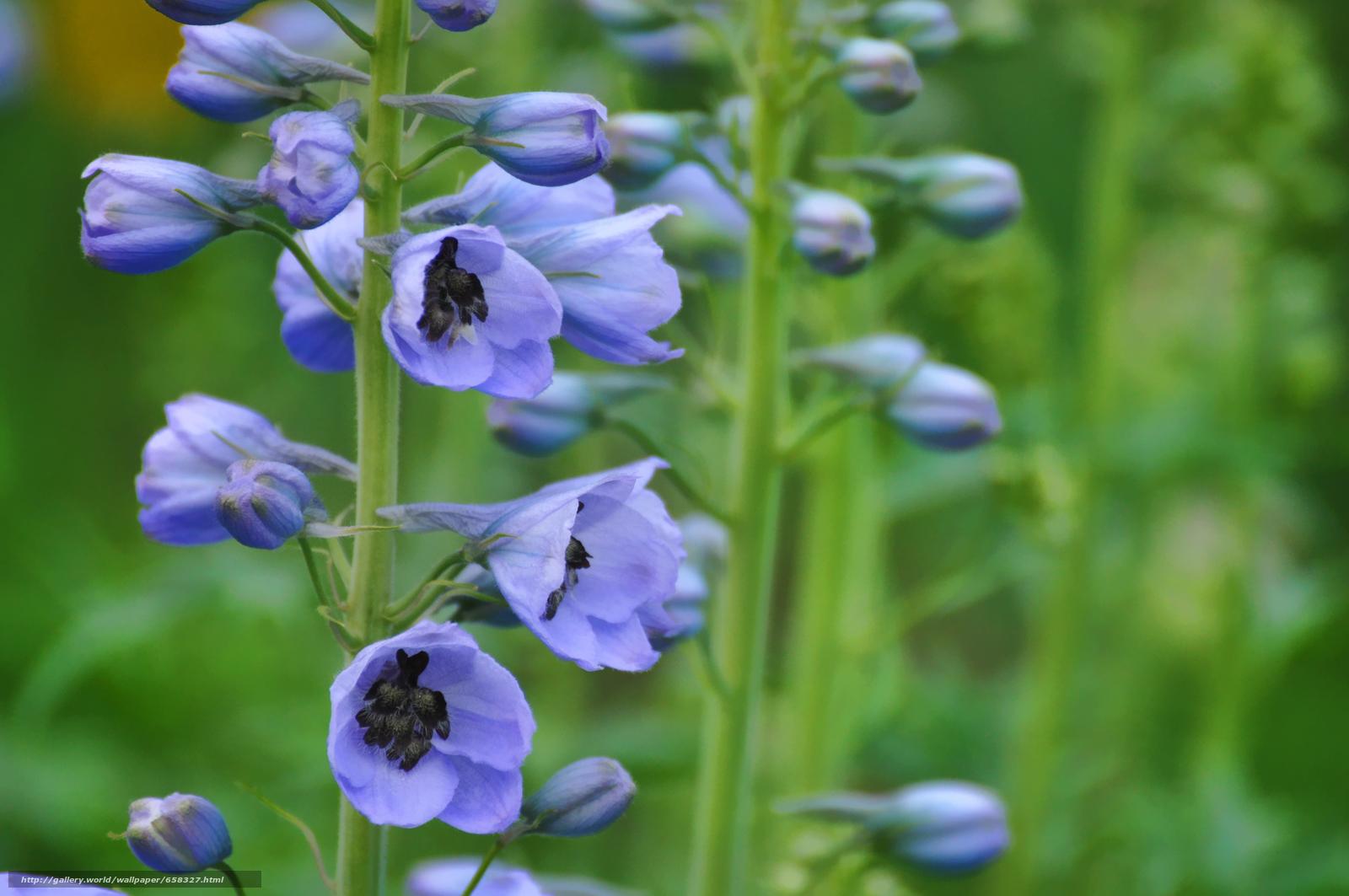 Скачать обои цветок,  цветы,  флора бесплатно для рабочего стола в разрешении 4288x2848 — картинка №658327