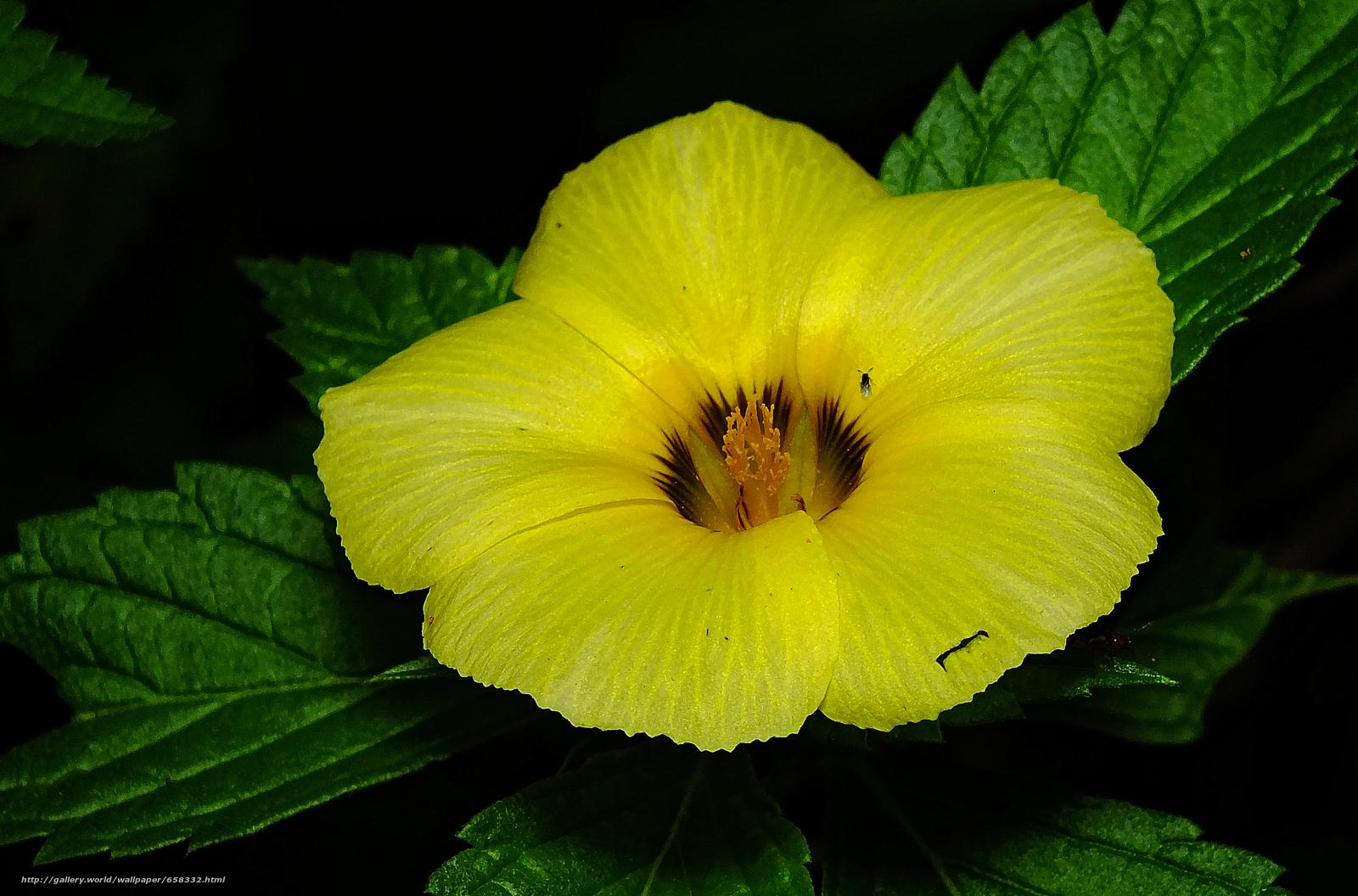 Descargar gratis flor,  Flores,  flora Fondos de escritorio en la resolucin 3504x2312 — imagen №658332