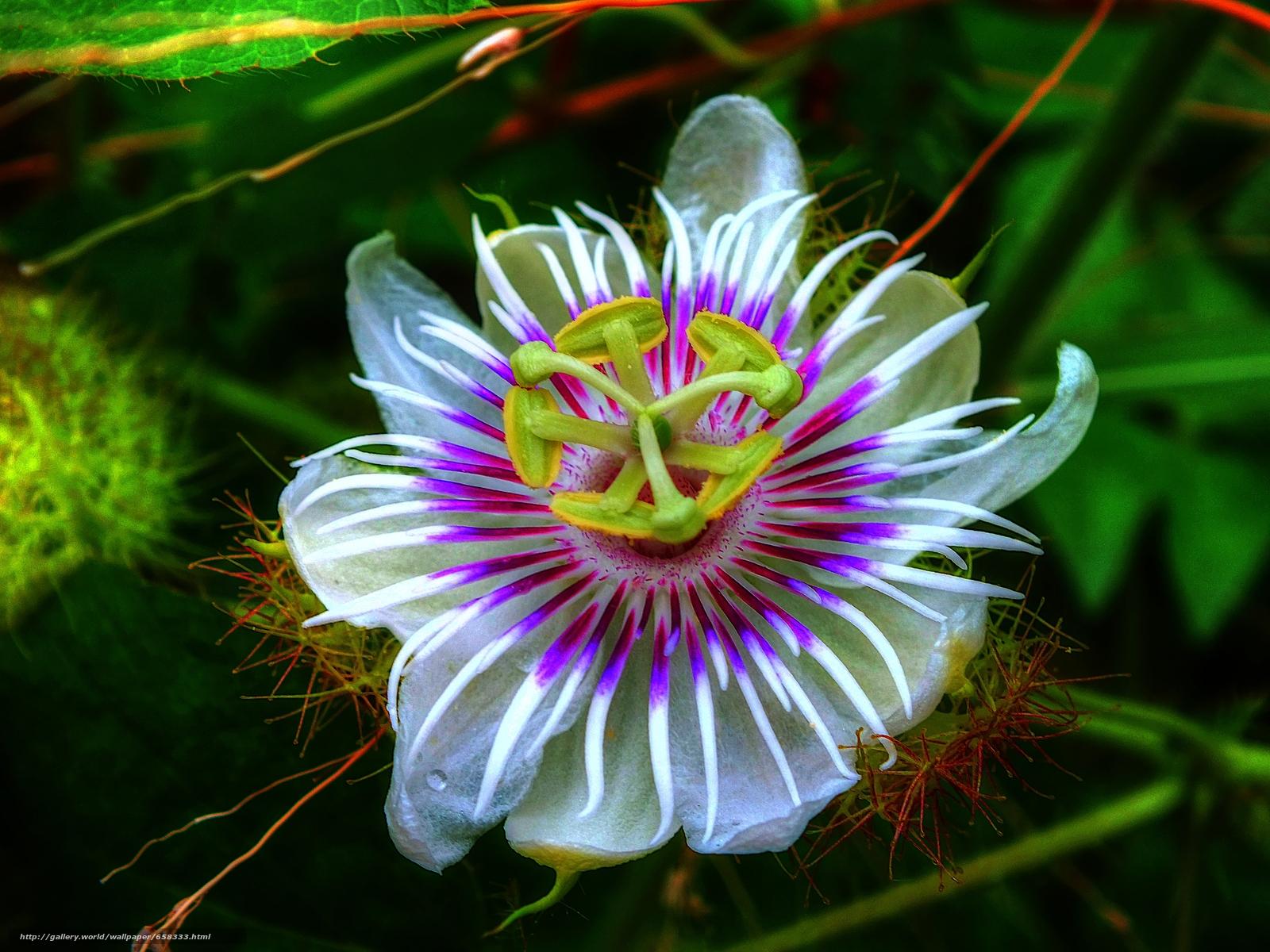 Tlcharger Fond d'ecran fleur,  Fleurs,  flore Fonds d'ecran gratuits pour votre rsolution du bureau 4608x3456 — image №658333