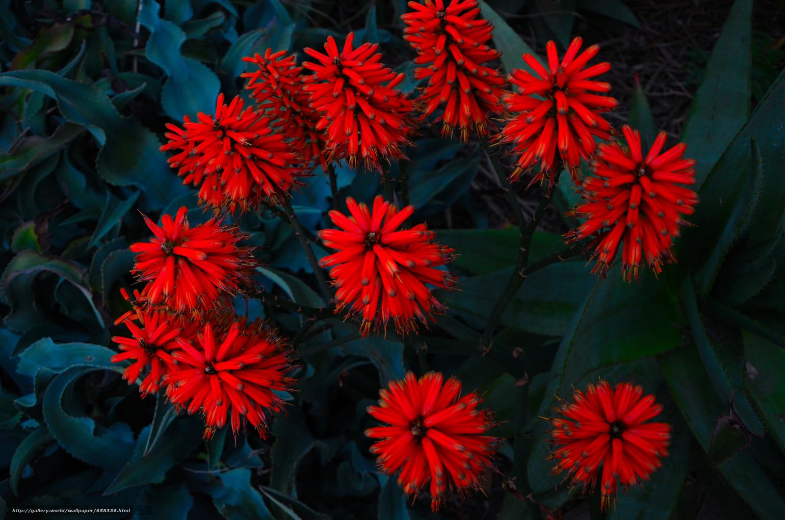 Скачать обои цветок,  цветы,  флора бесплатно для рабочего стола в разрешении 2048x1356 — картинка №658336