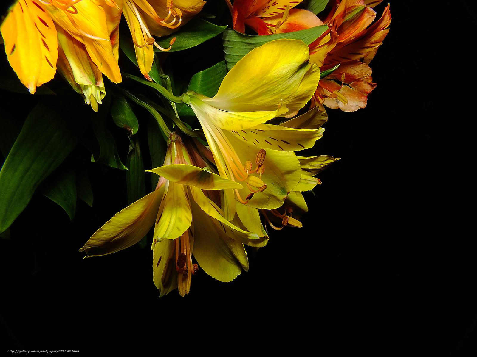 Скачать обои цветок,  цветы,  флора,  лилии бесплатно для рабочего стола в разрешении 4608x3456 — картинка №658342