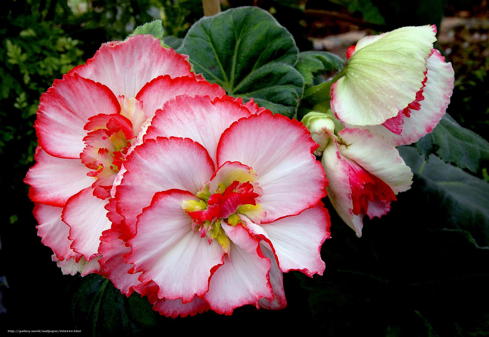 Скачать обои цветок,  цветы,  флора бесплатно для рабочего стола в разрешении 2400x1655 — картинка №658344