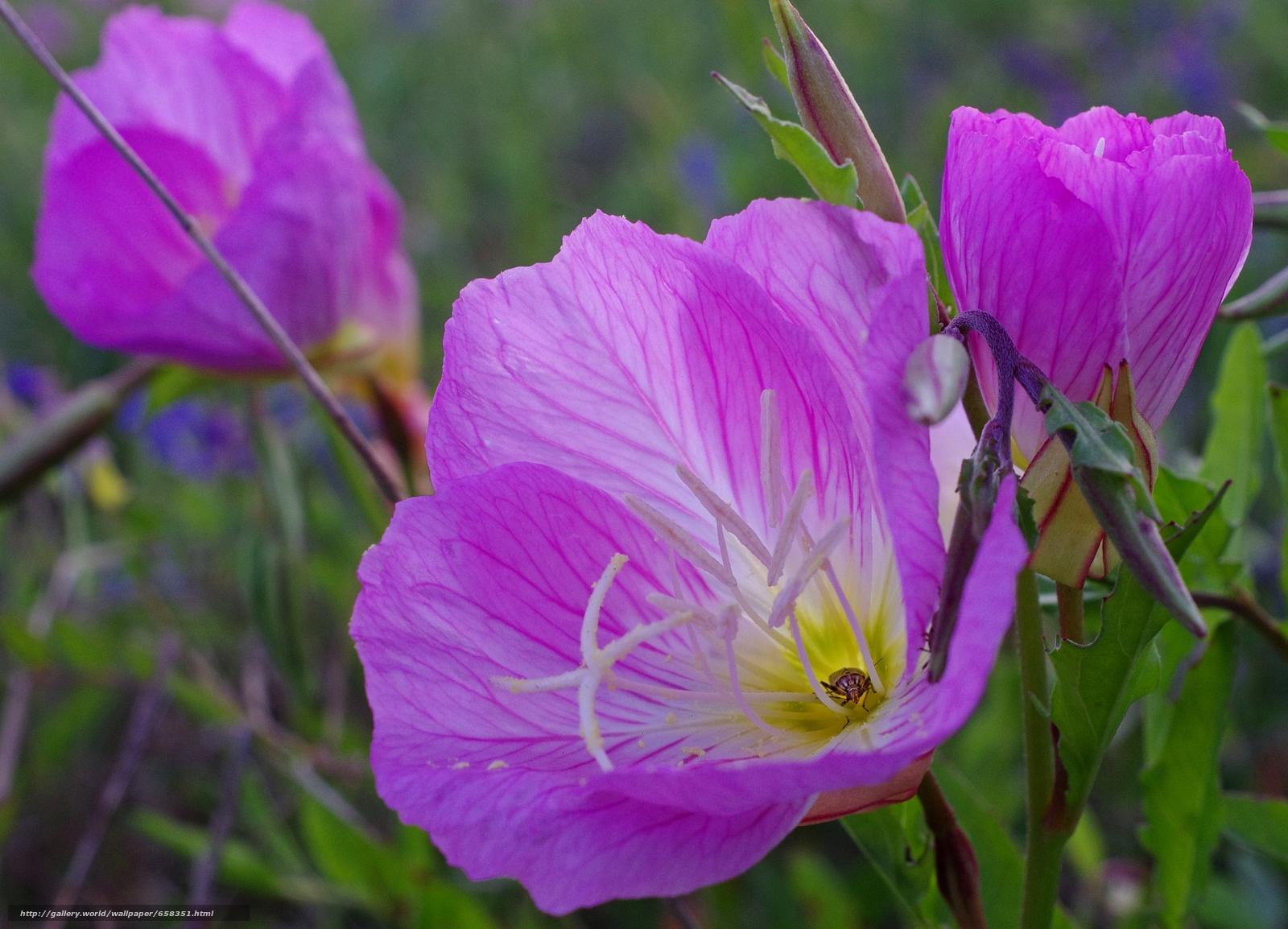 Скачать обои цветок,  цветы,  флора бесплатно для рабочего стола в разрешении 4513x3254 — картинка №658351