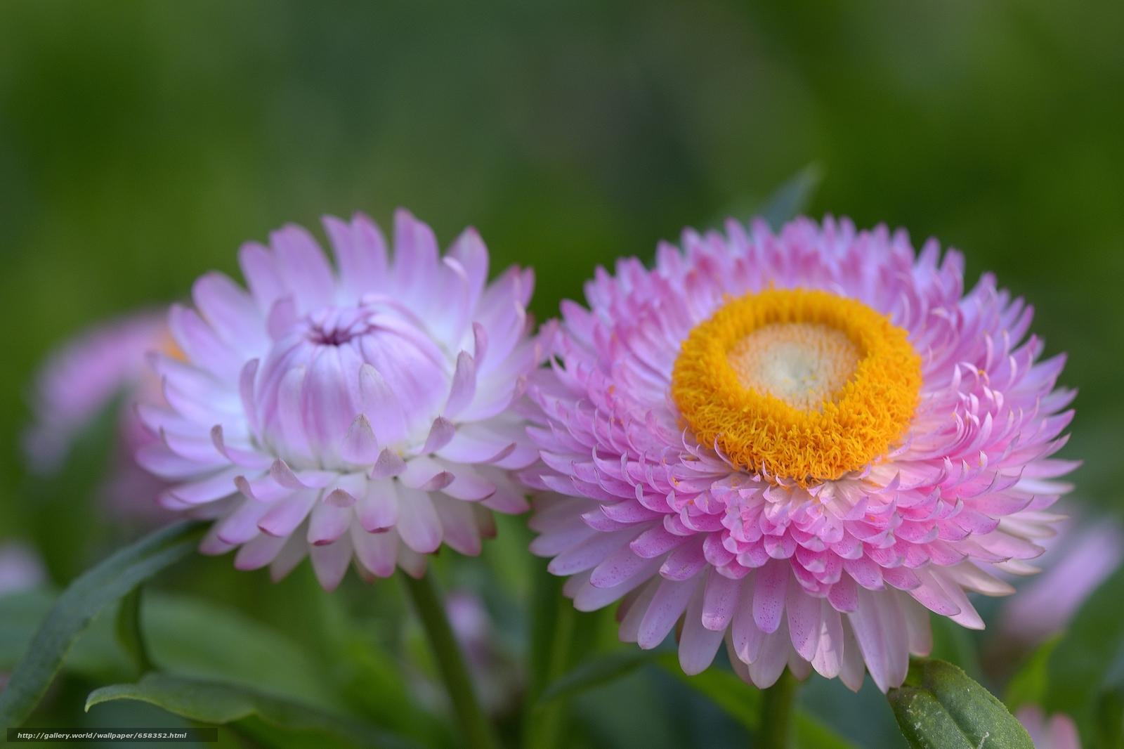 Скачать обои цветок,  цветы,  флора бесплатно для рабочего стола в разрешении 4683x3121 — картинка №658352