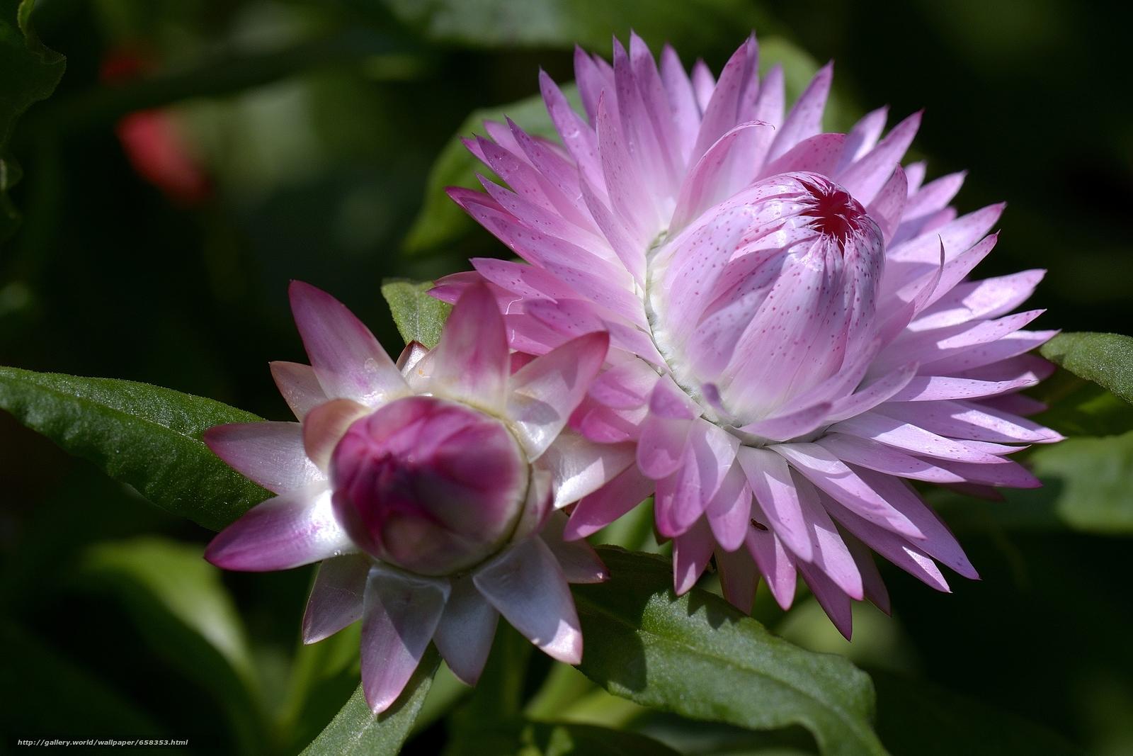 Descargar gratis flor,  Flores,  flora Fondos de escritorio en la resolucin 4502x3001 — imagen №658353