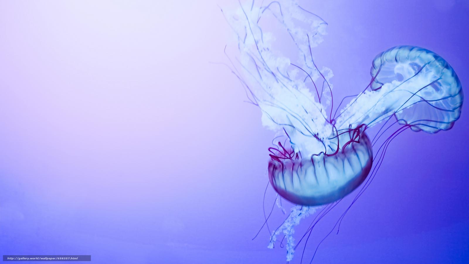 Descargar gratis medusa,  Medusa,  Mundial de Actividades Subacuáticas,  agua Fondos de escritorio en la resolucin 5000x2812 — imagen №658357