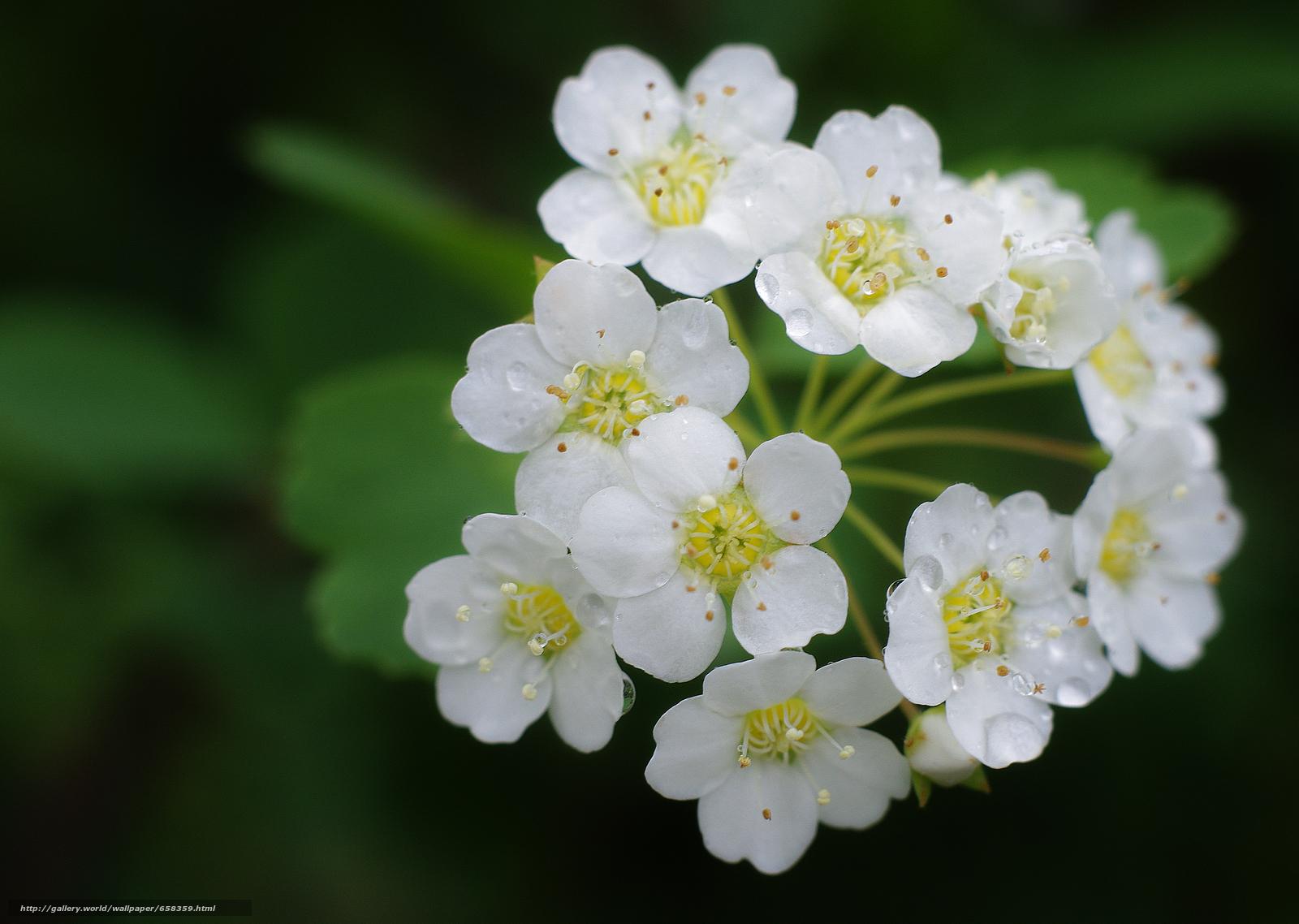 Скачать обои цветок,  цветы,  флора бесплатно для рабочего стола в разрешении 4245x3018 — картинка №658359