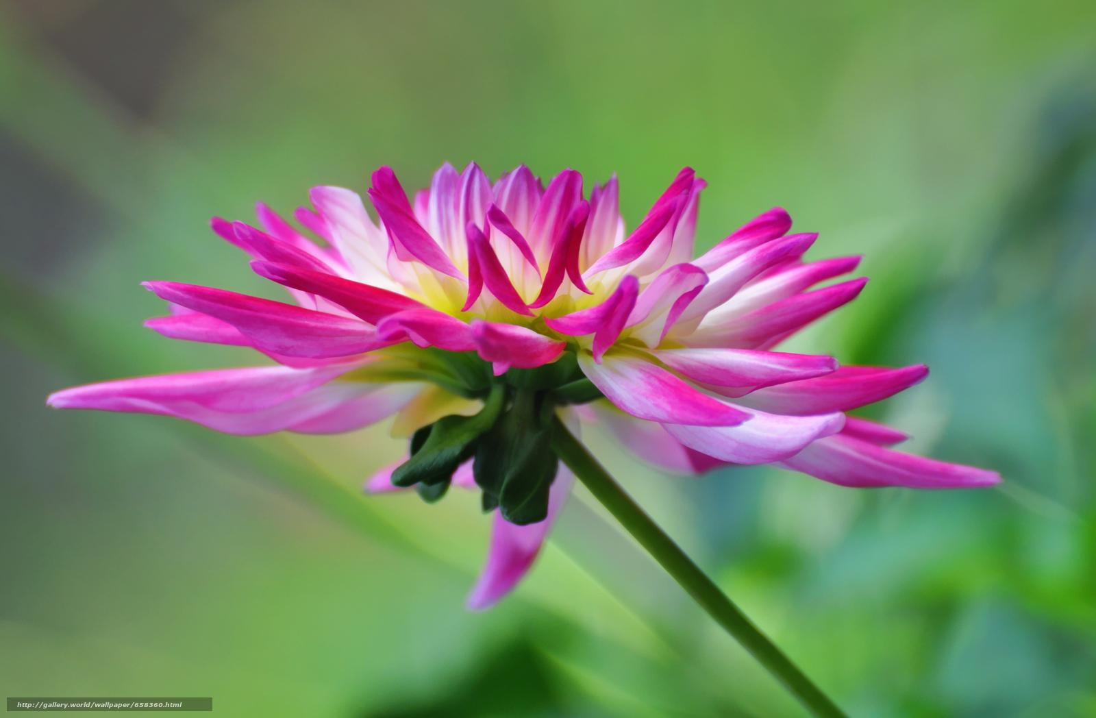 Скачать обои цветок,  цветы,  флора бесплатно для рабочего стола в разрешении 3982x2608 — картинка №658360
